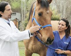 Medicina Veterinaria - Unab